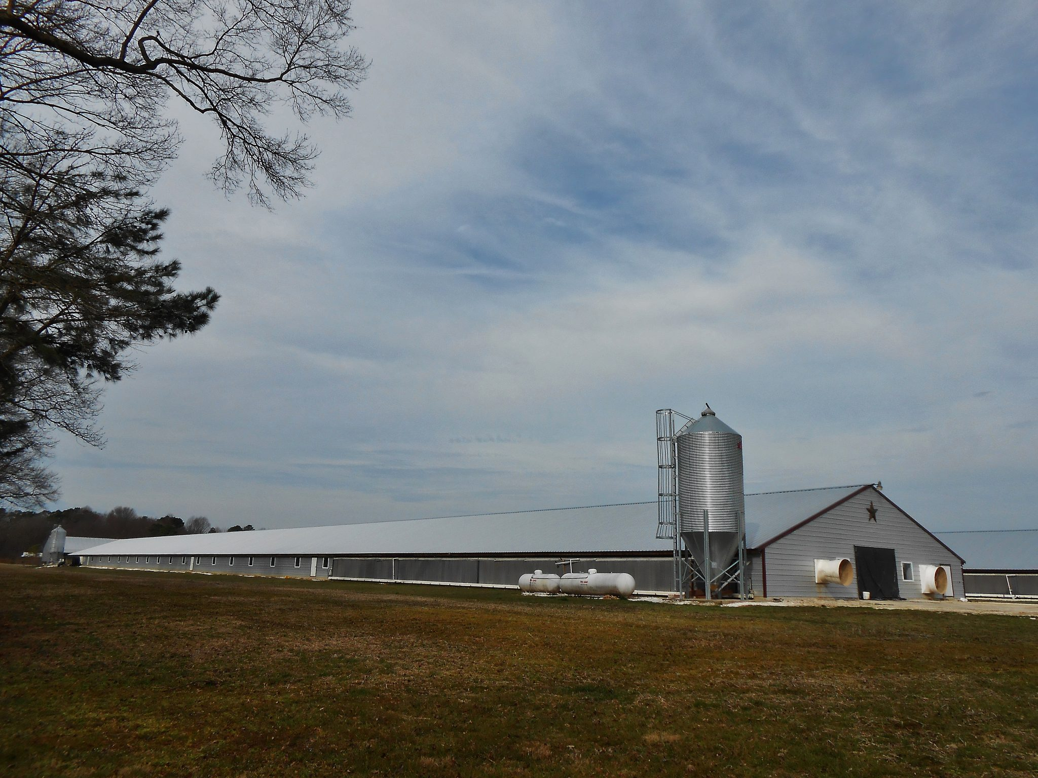 Chicken farm Delaware Maryland border